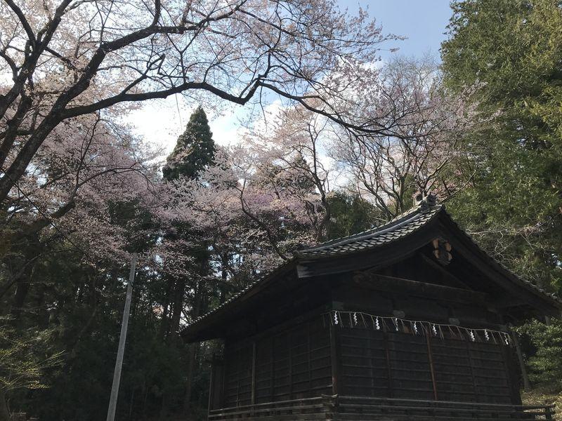 f:id:uesugi_rintaro:20200404145635j:plain