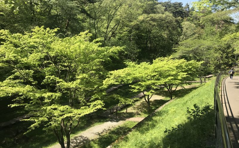 f:id:uesugi_rintaro:20200508134048j:plain
