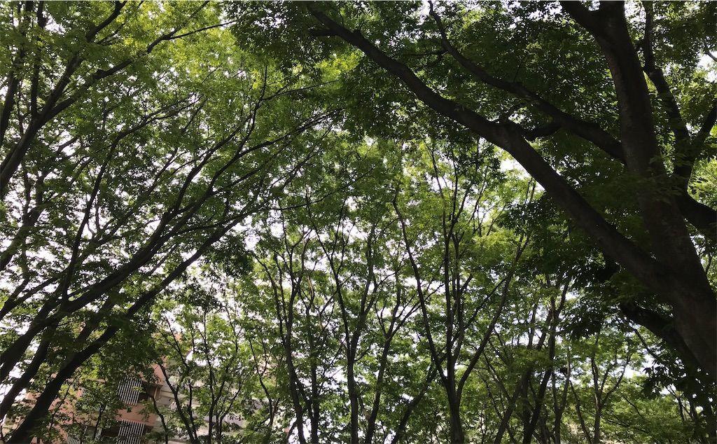 f:id:uesugi_rintaro:20210612131753j:plain