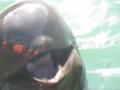 [クジラ]