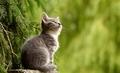 みんな大好きな猫の画像です