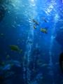 魚たち(京都水族館)