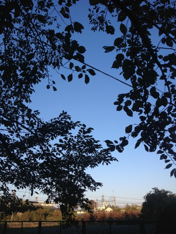 f:id:ujikenorio:20121021155159j:image