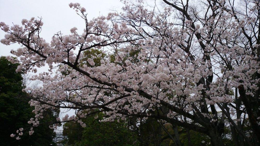 f:id:ujikintoki_byoubu:20160830103943j:plain