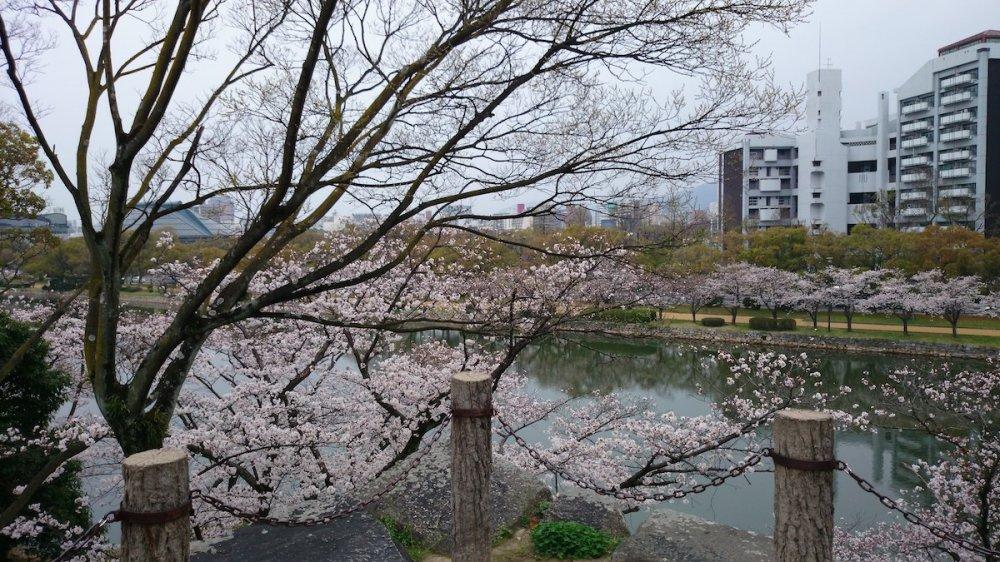 f:id:ujikintoki_byoubu:20160830104014j:plain