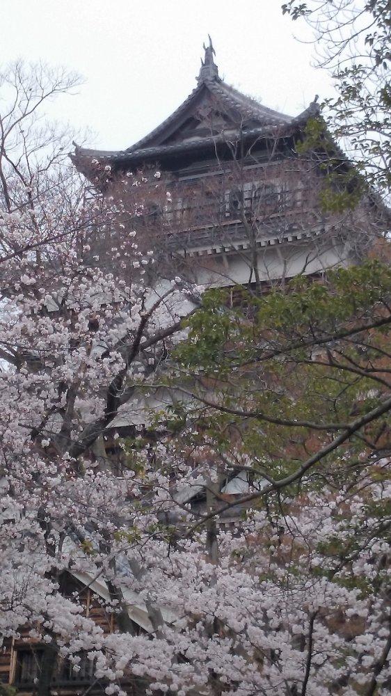 f:id:ujikintoki_byoubu:20160830104106j:plain