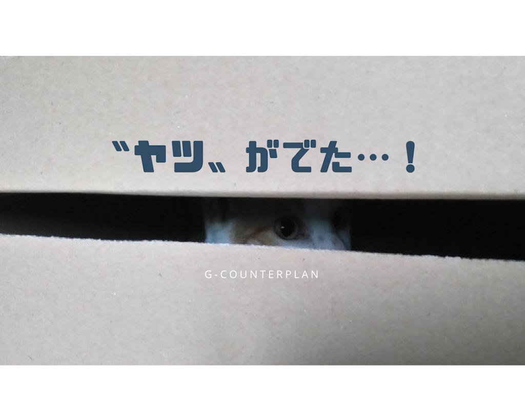 猫のいる家でのゴキブリ対策