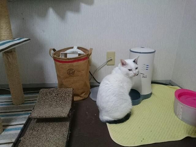 f:id:ukirakugurashi:20170221185830j:image