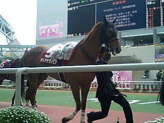 ディアデラノビア(阪神牝馬S)
