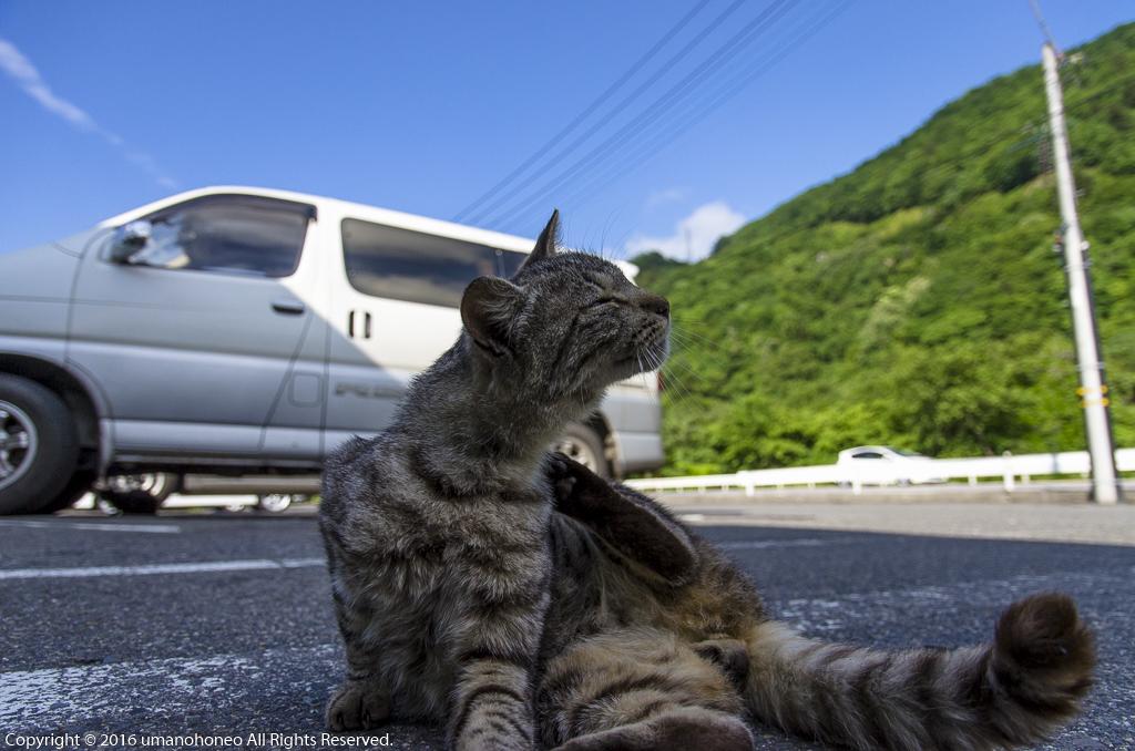 人に無関心な猫
