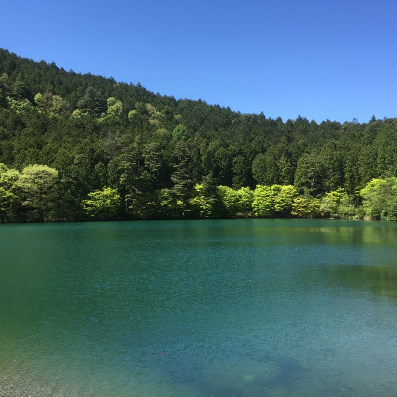 f:id:umaoyaji:20160504133348j:image:w360