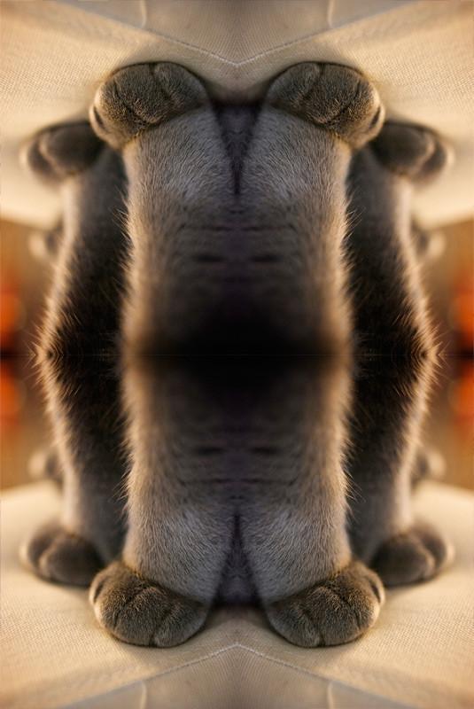 f:id:umelabo:20090120025920j:image