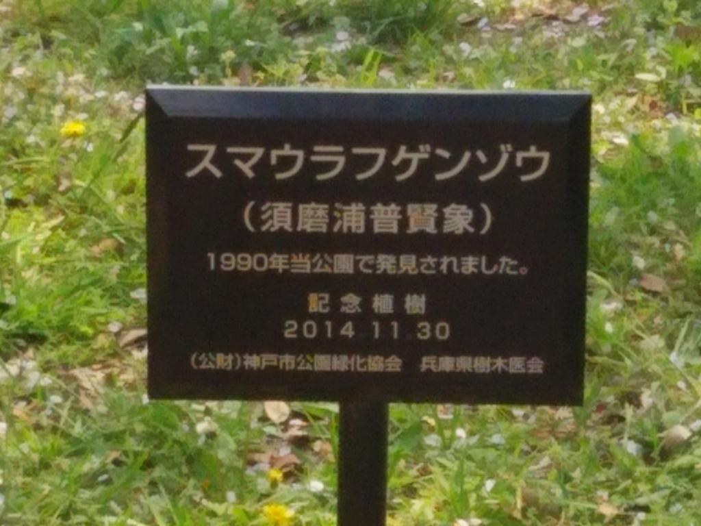 f:id:umenomi-gakuen:20180405004054j:plain