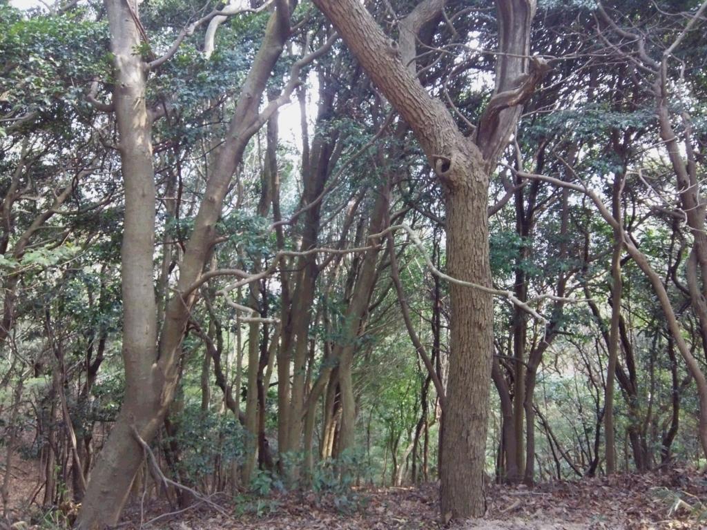 f:id:umenomi-gakuen:20180405004902j:plain