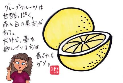 f:id:umenomi-gakuen:20190429134803j:plain