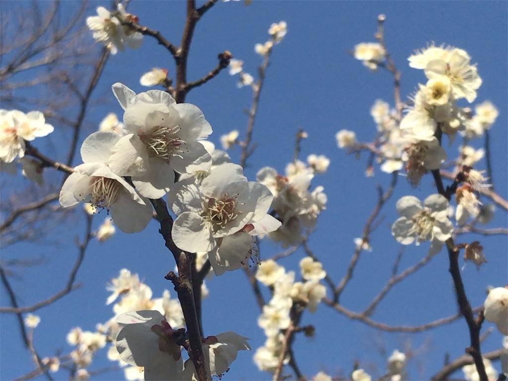 f:id:umi-shibuki:20200311102614j:image