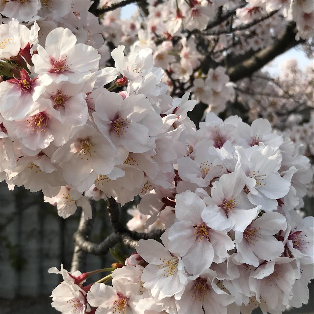 f:id:umi-shibuki:20200406224616j:image