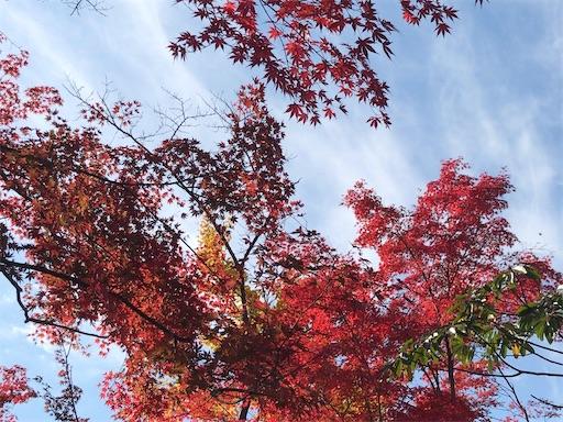 f:id:umi-shibuki:20201121232113j:image
