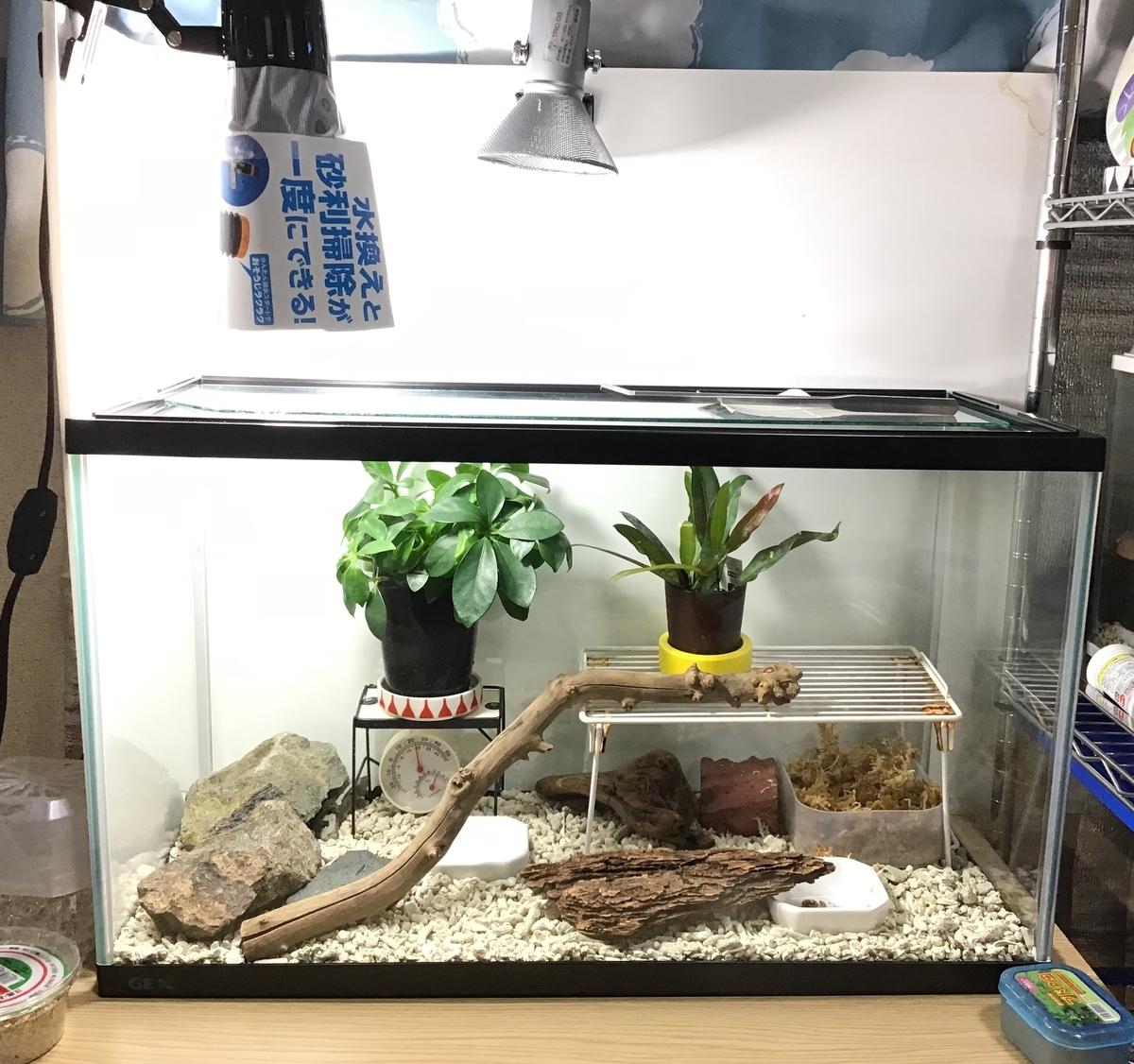 飼い 方 カナヘビ