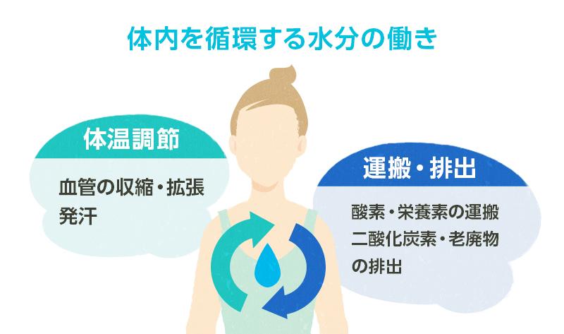 体内での水分の働きと重要性 | 日田の水研究所
