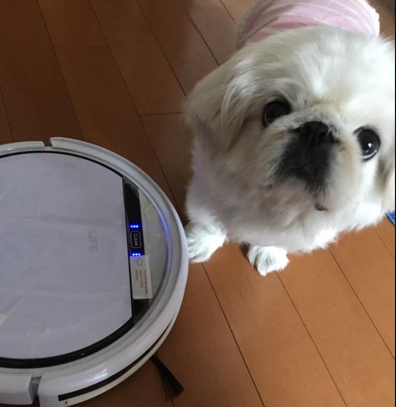 お掃除ロボットとうちの犬。