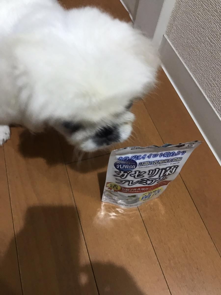 わんわん(ガセリ菌ってなに?)