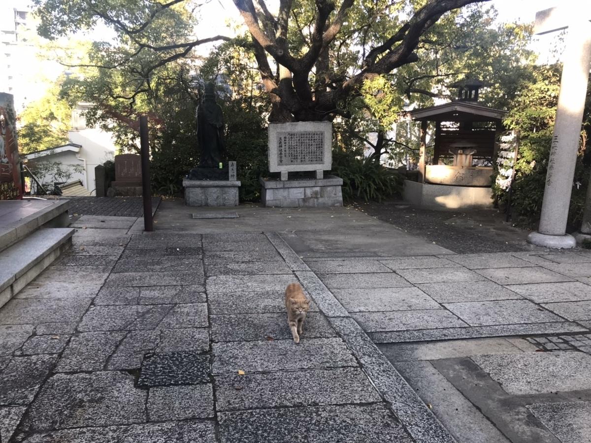 三光神社の境内にいた猫