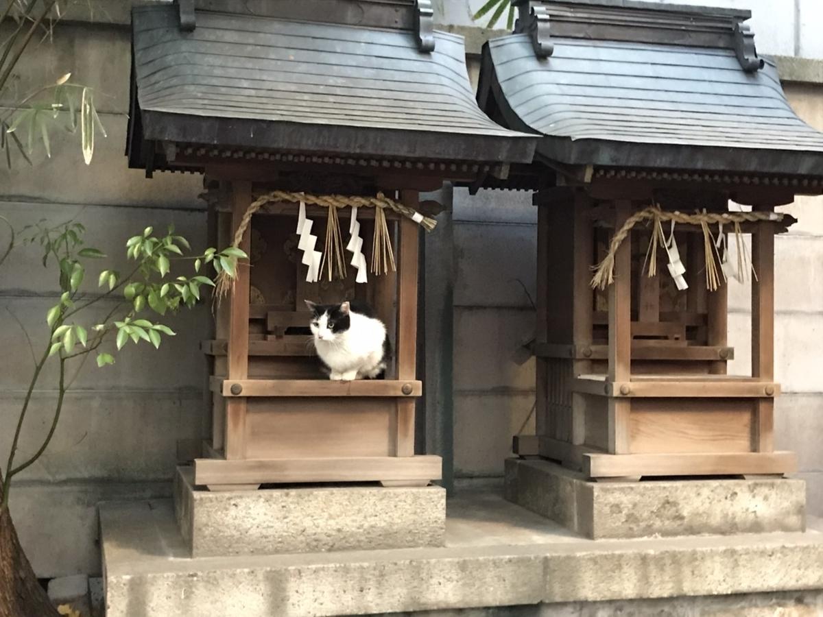 朝日神社にいた猫