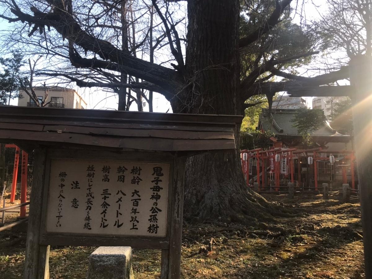 子授け銀杏(公孫樹)