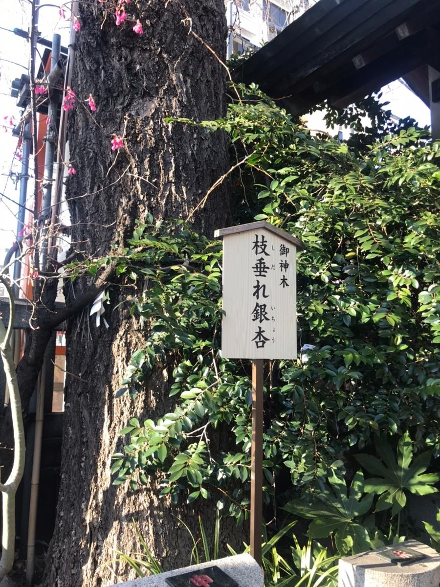 波除稲荷神社の御神木「枝下れ銀杏」