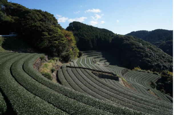 f:id:umisuki-ikka:20200123165728p:plain