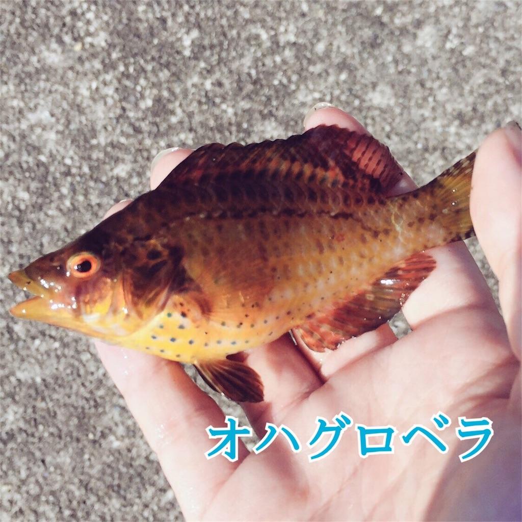 f:id:umitokaze0912:20170330115403j:plain