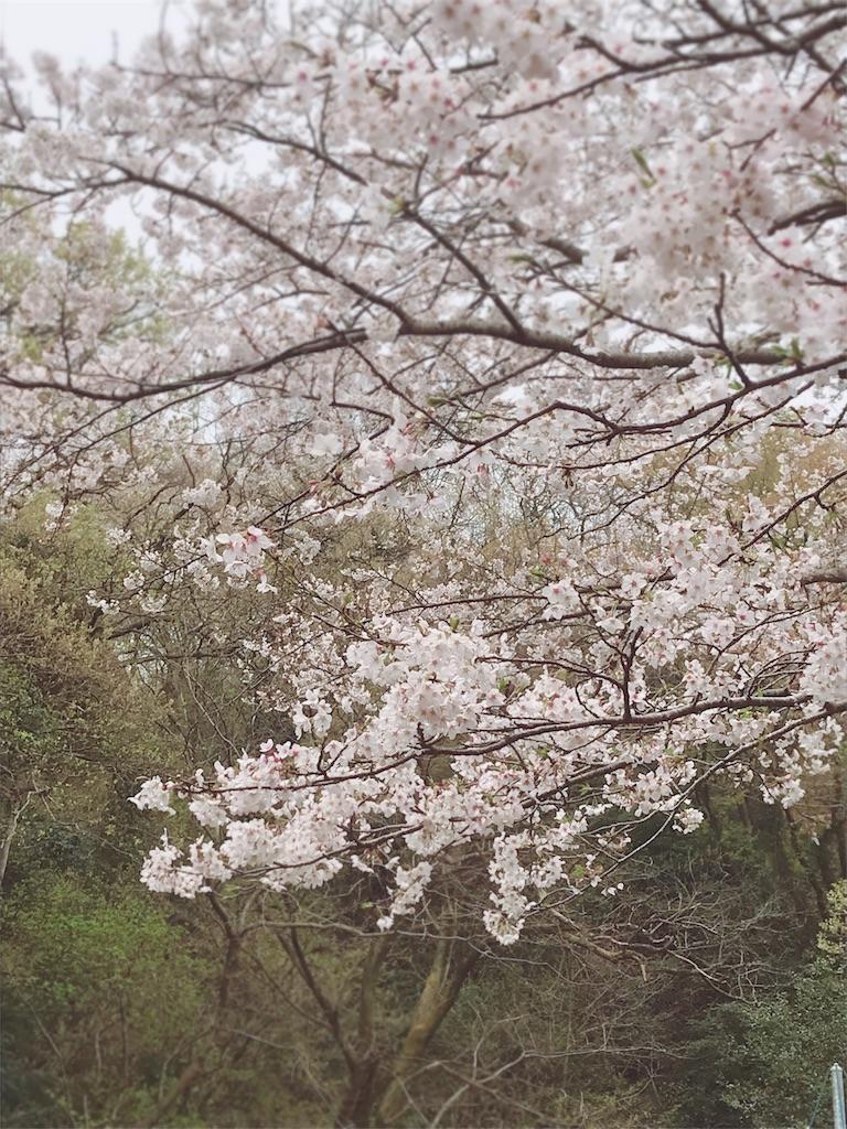 f:id:umiushi_1550:20190411090956j:image