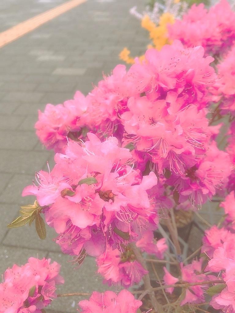 f:id:umiushi_1550:20190411091141j:image
