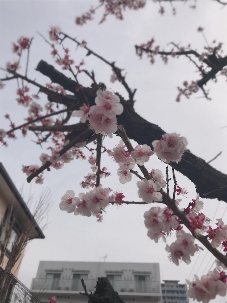f:id:umiushi_1550:20190411091328j:image