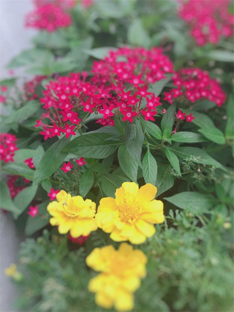 f:id:umiushi_1550:20190411091702j:image