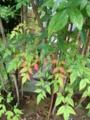 f:id:umryuyanagi104:20121001120953j:image:medium:right