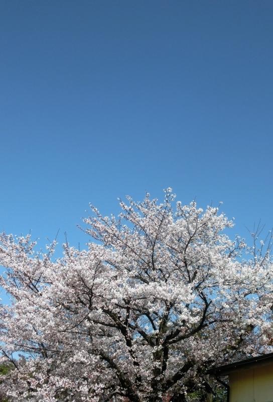 f:id:umryuyanagi104:20180331092135j:image:w360