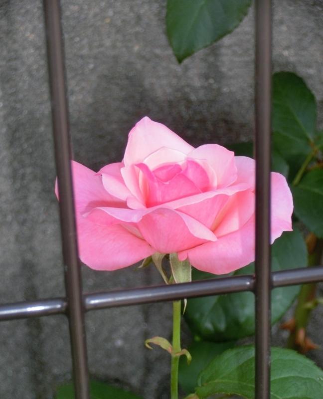 f:id:umryuyanagi104:20180527082802j:image:w360