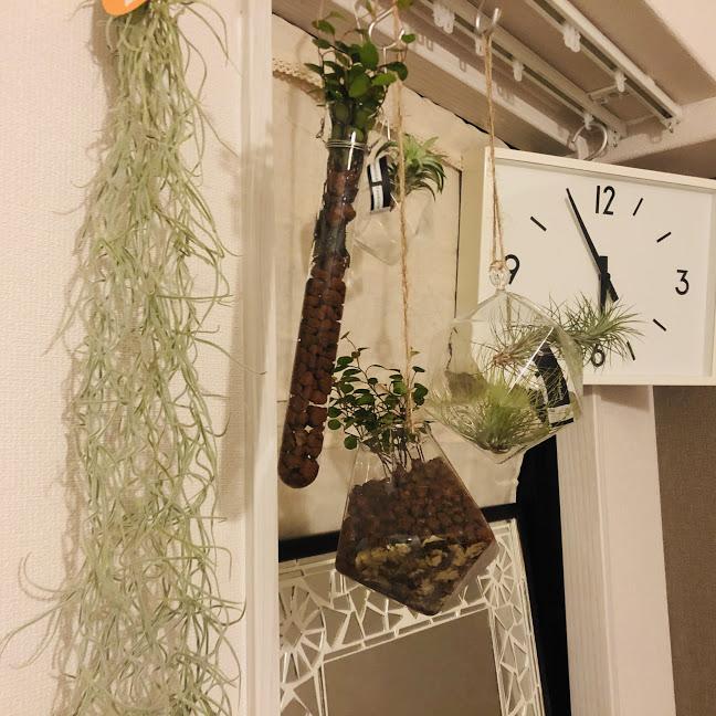 デスク周り インテリア 観葉植物