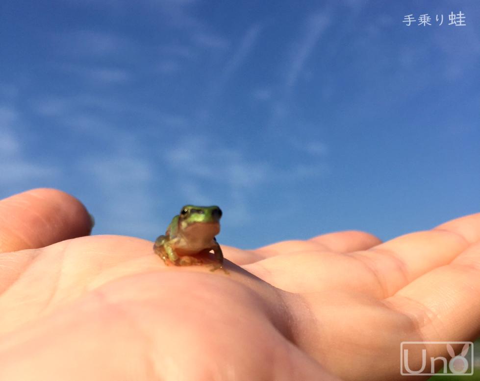 手乗り蛙の写真