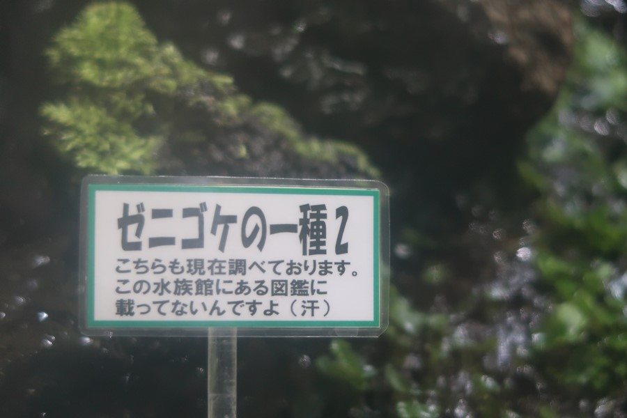 f:id:unyora-d:20180714111406j:plain