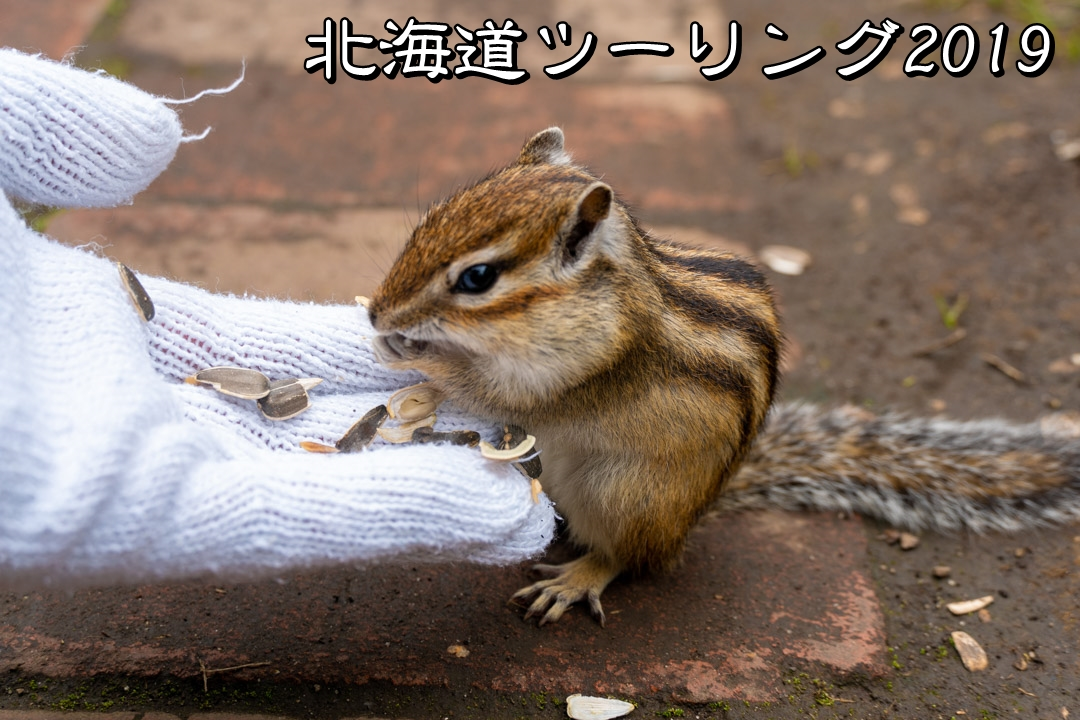 f:id:unyora-d:20190920104514j:plain