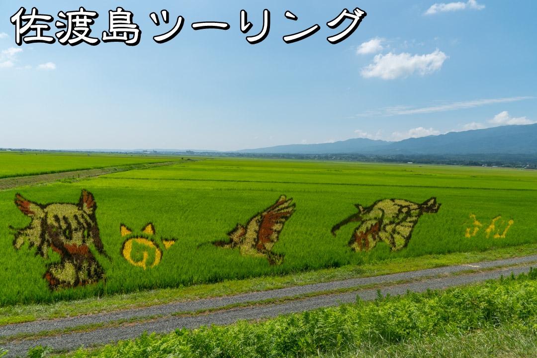 f:id:unyora-d:20191124232112j:plain