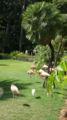 ワイキキ動物園 フラミンゴ