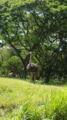 ワイキキ動物園 ダチョウ