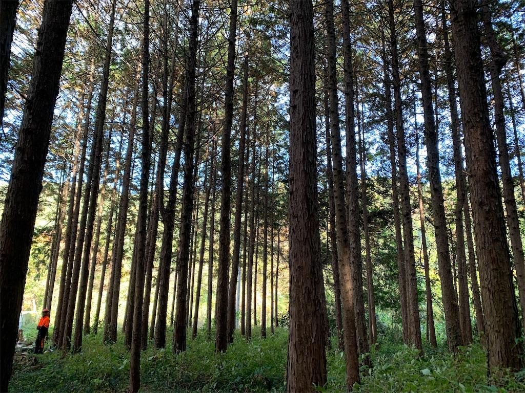 森は美しい