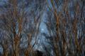f:id:uralic:20120110003316j:image:medium
