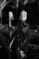 f:id:uralic:20120111011530j:image:medium