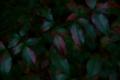 f:id:uralic:20120118000454j:image:medium